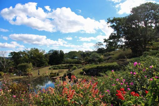 Maleny Botanic Gardens Photo S. Newrick