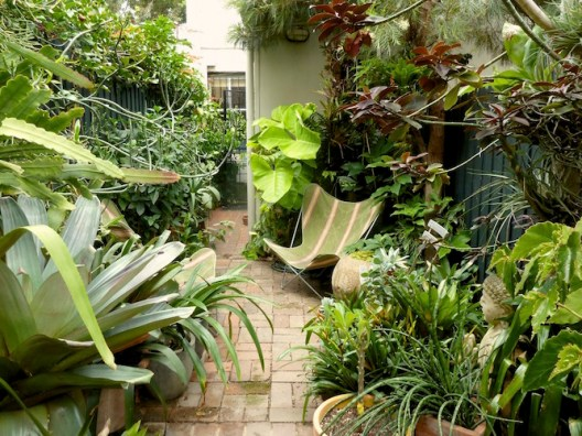 Tiny inner-city Sydney courtyard garden. Design Paradisus