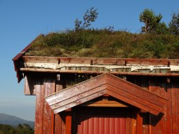 Roof garden on a Norwegian house