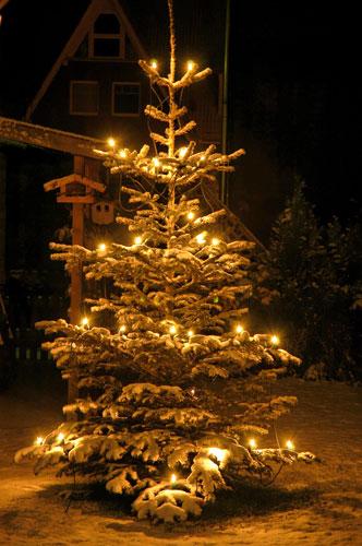 glanzpunkte der weihnachtsbaum als blickfang im garten. Black Bedroom Furniture Sets. Home Design Ideas