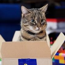 por que gatos gostam caixa de papelao