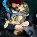 homeless-dogs-and-owners-4