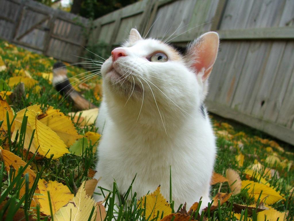 Acne felina: o que é e como tratar