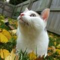 pontinhos pretos queixo gato