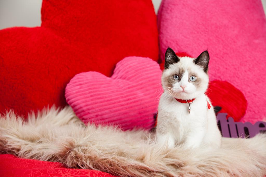 """Como os gatos falam """"Eu te amo"""" - e como você pode responder!"""