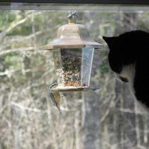televisao de gato