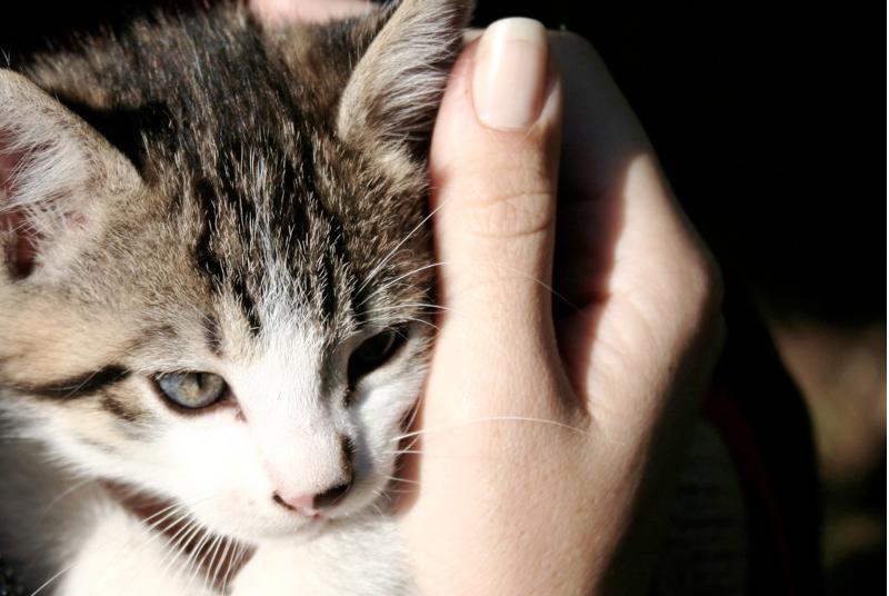 Em nome da ciência, agrade mais gatinhos!