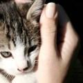 agradar-gatinhos