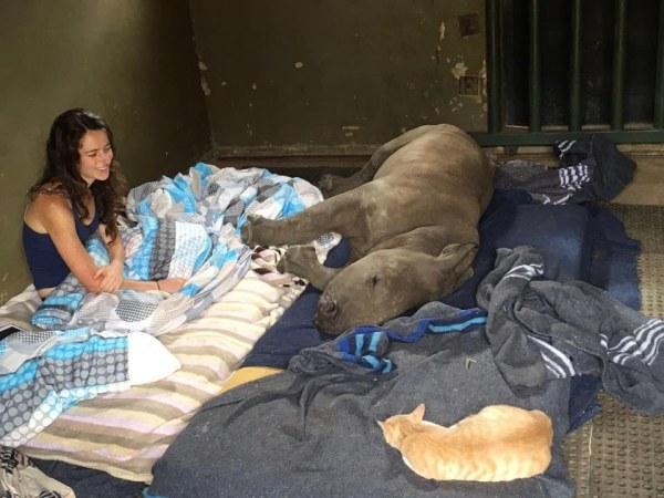 nandi mewie gato rinoceronte amizade 2