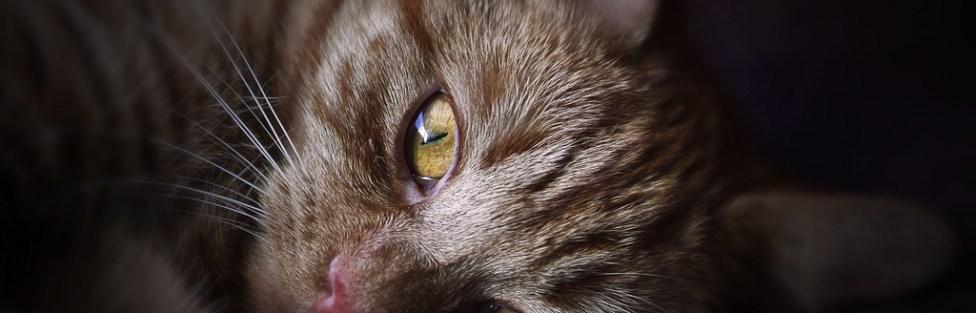 Gatos podem ter transtornos mentais?