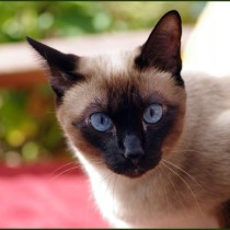 gato escreveu artigo física fdc willard