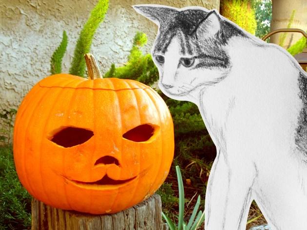 GA_Gato and the Pumpkin
