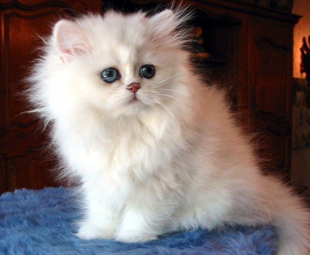Curiosidades de los Gatos.