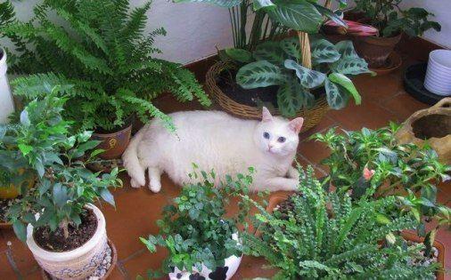 Algunas plantas tóxicas para los gatos