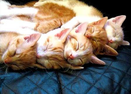 #Galería :: Gatos durmientes II