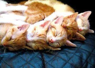 Fotos de Gatos Durmiendo