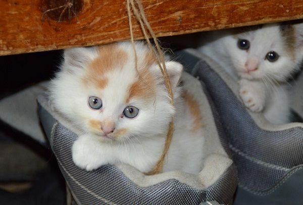 Cómo Elegir Guarderías para Gatos