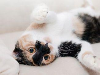 Beneficios Psicológicos de Tener un Gato