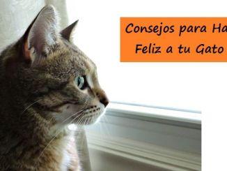Consejos para Hacer Feliz a tu Gato