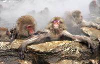 monkey2_1206001i