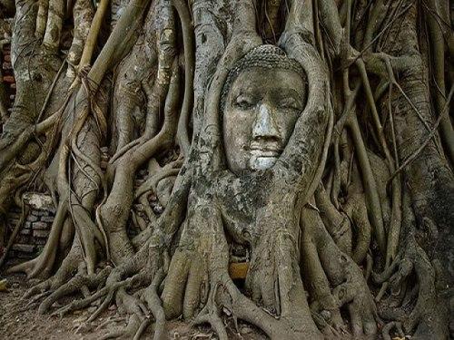 Buddha Statues: Ayutthaya Buddha Head