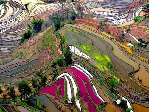 Amazing Places: Rice Field Terraces