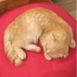 シーロムにある猫カフェ CAT UP CAFE