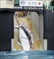 wHale Slaughter