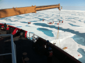 Scientists Discover Huge Phytoplankton Bloom in Ice Covered Waters