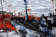 Sea Shepherd's Sea Lawyers Back And Fill On Promise To Stop Harassing Whalers