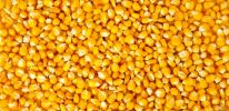 Corn Shipments to China Halted