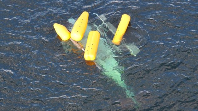 Inflatables keep a helicopter upright following a crash in the Gulf of Mexico, Oct. 9, 2013. A Coast Guard Air Station New Orleans MH-65 helicopter and crew assisted in the rescue and transport of one person. (U.S. Coast Guard photo)