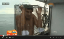 Shark Diving with a Bird Cage? No Worries Mate!