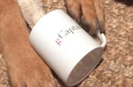 Free gCaptain Mugs…