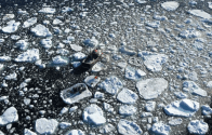PHOTOS: Icy Newfoundland Rescue