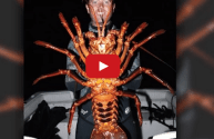 Biologist Catches Mouthwatering 12 Pound Lobster