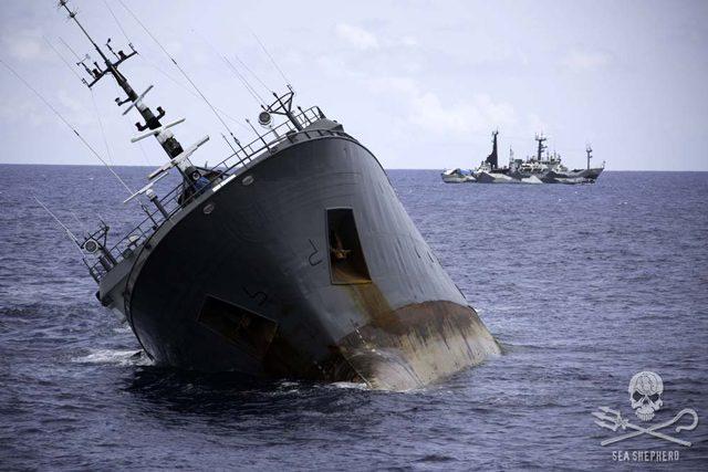 thunder sinking sea shepherd