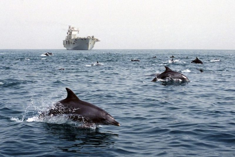Dolphins escort HMS Ocean