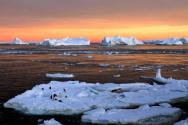 Antarctic Ocean To Host Worlds Largest Marine Sanctuary