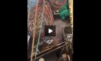 WATCH: Fishing Net Surprise