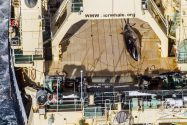 Australia 'Deeply Disappointed' by Japan's Continued Whale Hunt in Southern Ocean