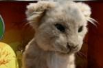 geardiary_wowwee_lion_cub_02