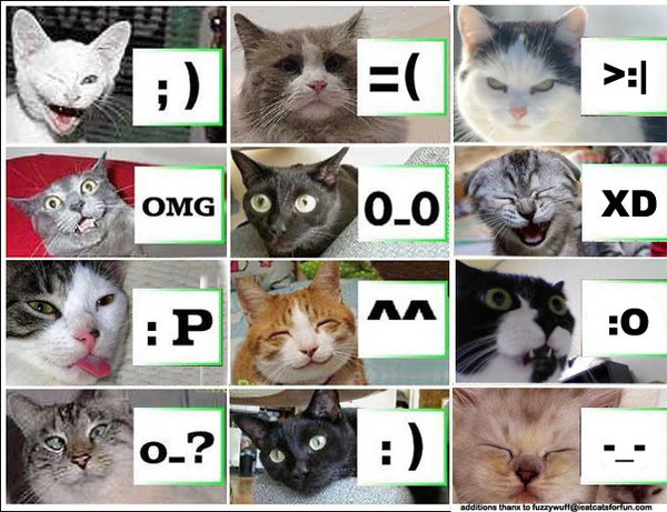 Cats emoticons