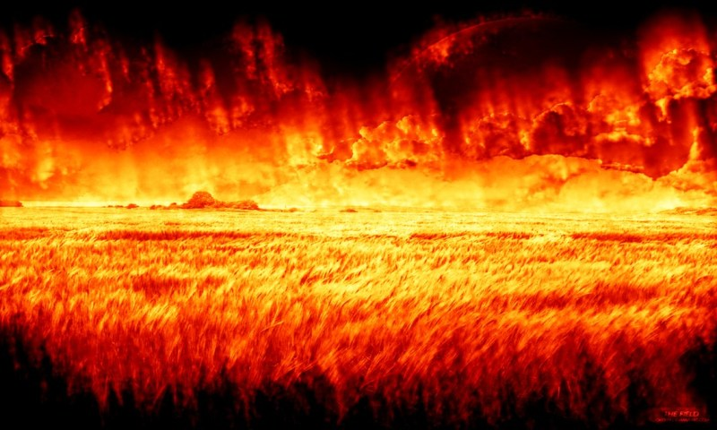 The_Field_in_Flames