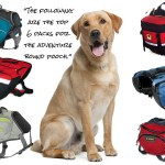6 of the Best Dog Packs for the Adventure Bound Pooch