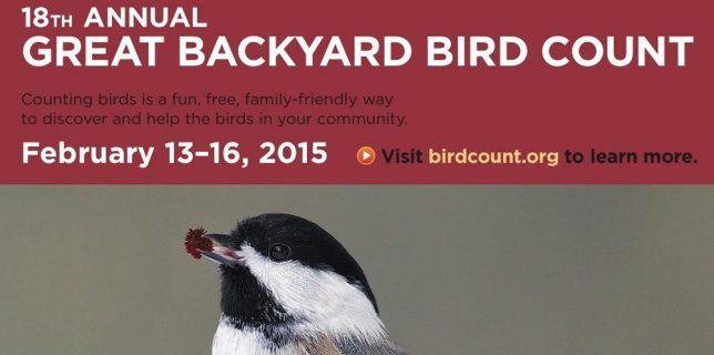 great backyard bird count is an easy annual family nature project