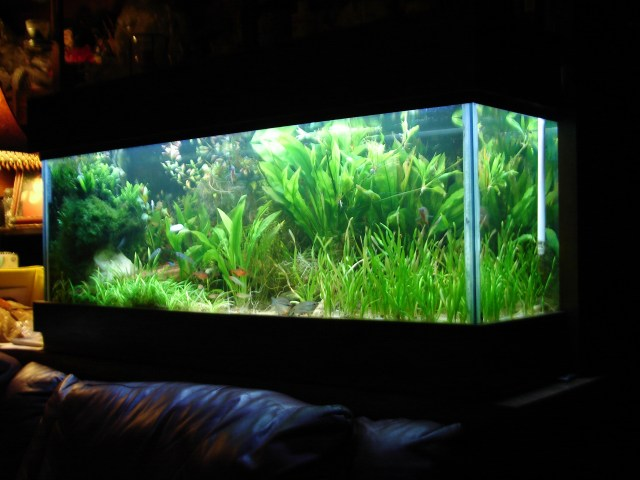 70 gallon planted tank you can see a little bit about how the tank is