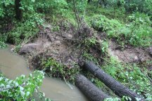 We have trees down line this near lots of creeks.