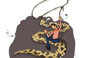 doma-serpientes-phyton