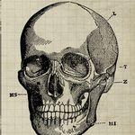 web-designers-anatomy-excerpt